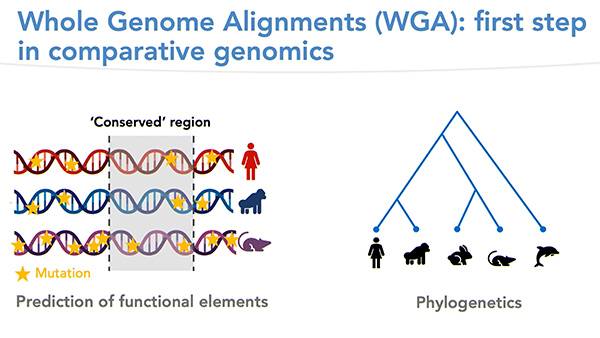 SegAlign: A Scalable GPU-Based System for Whole Genome Alignment